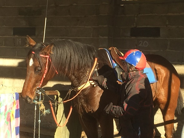 2yo-mosayter-gelding-ex-triple-star-luskin-star-2weeks-into-first-prep-with-alison-smith-orange