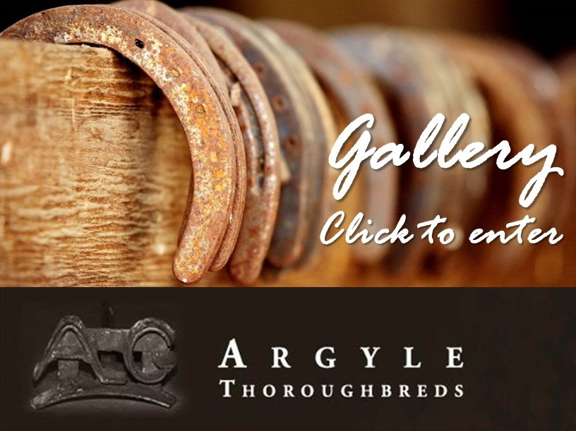 gallery-link-argyle-thoroughbreds