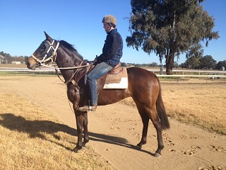 gypsy-jean-3-yo-mosayter-filly